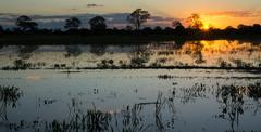 Sunset in pantanal wetlands with pond and ipe trees - stock photo