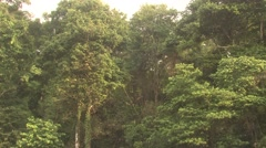 Forest Corcovado National Park Winter Rainforest Jungle Tropical Zoom In - stock footage