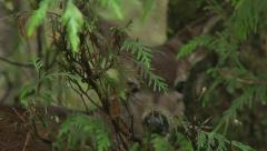 Deer in Forest - stock footage