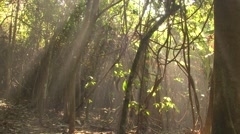Forest Corcovado National Park Winter Jungle Rainforest Sun Rays Dense - stock footage