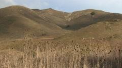 Prairie Golden Gate National Recreation Area Winter Coastal Grasslands Maritime - stock footage