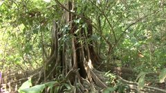 Trees & Shrubs Corcovado National Park Winter Jungle Canopy Tilt Up Stock Footage