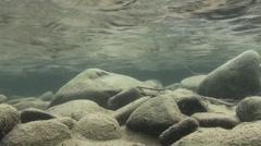 Dipper Lone Winter Underwater Stock Footage