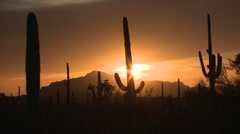 Desert Organ Pipe Cactus National Monument Spring Sunset Saguaro Sonoran Orange Stock Footage