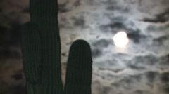 Saguaro Cactus Spring Night Full Moon Floodlight Stock Footage