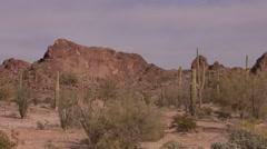 Desert Organ Pipe Cactus National Monument Spring Saguaro Sonoran - stock footage