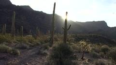 Desert Organ Pipe Cactus National Monument Spring Sunset Saguaro Sonoran Sun Stock Footage