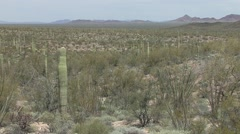 Desert Organ Pipe Cactus National Monument Spring Sonoran - stock footage