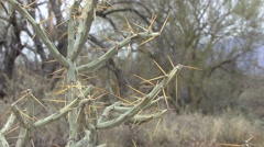 Cactus Spring Thorns - stock footage