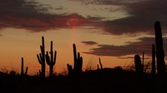 Desert Saguaro National Park Spring Sunset Orange Sky Stock Footage