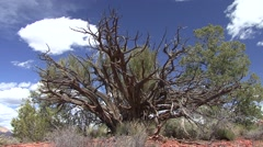 Trees & Shrubs Red Rocks State Park Spring Dead Snag Desert - stock footage