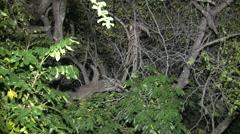 Greater Bushbaby Lone Climbing Winter Night Telephone Line Floodlight - stock footage