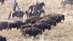 Tracking buffalo slow motion Stock Footage