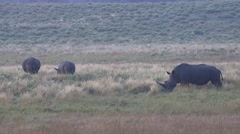 White Rhinoceros Several Winter Stock Footage