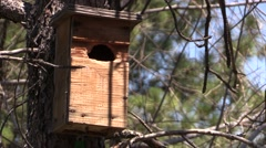 Red Squirrel Lone Summer Birdhouse Shelter Hole - stock footage