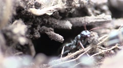 Ant Many Summer Stock Footage