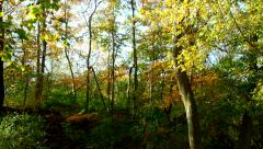 Beauty of Autumn Stock Footage