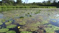 Lake & Pond Turtle Lake Summer Lily Pads Handheld Stock Footage
