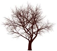 Winter tree Stock Illustration