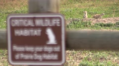 Black-tailed Prairie Dog Summer Protected Area Sign Focus Transition Stock Footage