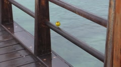 Galapagos Yellow Warbler Male Lone Fall Fence Rail Zoom In Stock Footage