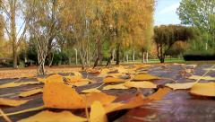 Scene of a public park with two birds on a wooden table  Stock Footage