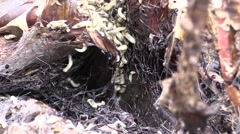 Fly Larvae Many Feeding Fall Dead Carrion Rotting - stock footage