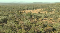 Savannah Welgevonden Game Reserve Bush Safari Pan Stock Footage