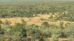 Savannah Welgevonden Game Reserve Bush Tilt Up Stock Footage