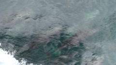 Bottlenose Dolphin Many Fall Stock Footage