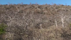Savannah Galapagos Islands Fall Floreana Island Pan Stock Footage