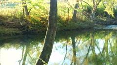 Gentle Stream in Autumn Stock Footage