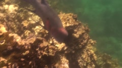 Saltwater Fish Galapagos Islands Fall Underwater - stock footage