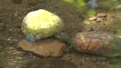 Turtle Manual Antonio National Park Winter Stock Footage
