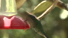 Green Violet-ear Several Feeding Winter Hummingbird Feeder Stock Footage