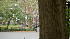 Flock Birds Washington Square Park Pigeons NYC Manhattan Freedom Flying Stock Footage