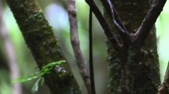 Anole Adult Lone Resting Winter Tail Body Head Tilt Down Stock Footage