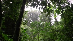 Forest Monteverde Winter Rain Downpour Monsoon Jungle - stock footage