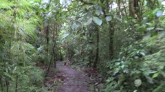 Recreation Monteverde Winter Jungle Rainforest Hiking Trail Moving Stock Footage
