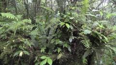 Forbs Monteverde Winter Ferns Forbs Jungle - stock footage