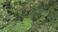 Forest Monteverde Winter Canopy From Above Stock Footage