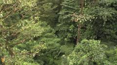 Forest Monteverde Winter Canopy Treetops Jungle Tilt Up Stock Footage