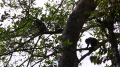 Squirrel Monkey Several Winter Backlight Stock Footage