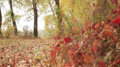 Stock Video Footage of Forest footpath in e yellow wood with river. Steadicam   low  view