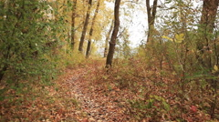 Stock Video Footage of Footpath in autumn yellow wood. Steadicam    view
