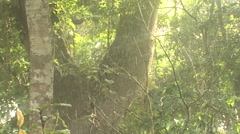Forest Lamanai Spring Rainforest Jungle Rain Precipitation Stock Footage