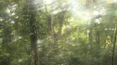 Forest Lamanai Spring Rainforest Jungle Rain Precipitation Sun Flare Stock Footage