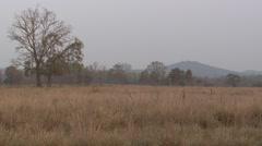 Prairie Kanha National Park Spring Meadow Grassland Stock Footage