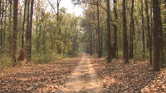 Forest Kanha National Park Spring Woods Trail Road Stock Footage
