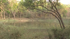 Wetland Kanha National Park Spring - stock footage